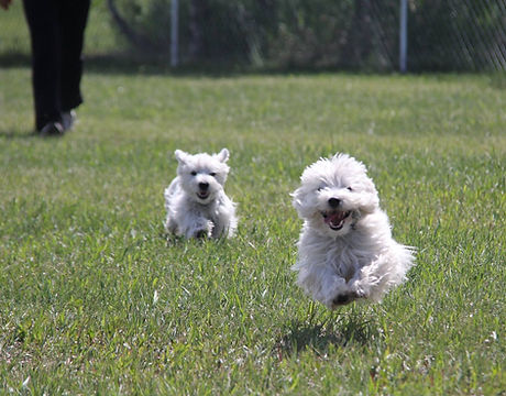 happy dogs playing at the place 4 paws