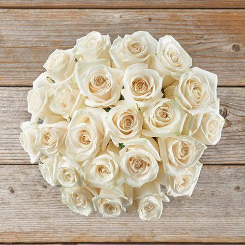 Inconditionnelle roses Blanche