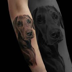 #dog #chien #dogtattoo #realismtattoo  #