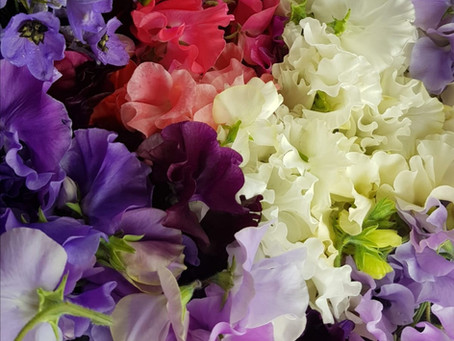 Tips for Growing Sweet Peas for your own Bouquet