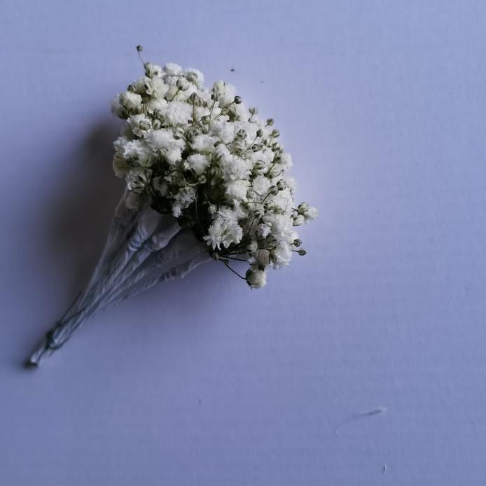 Dried Flowers 6.jpeg