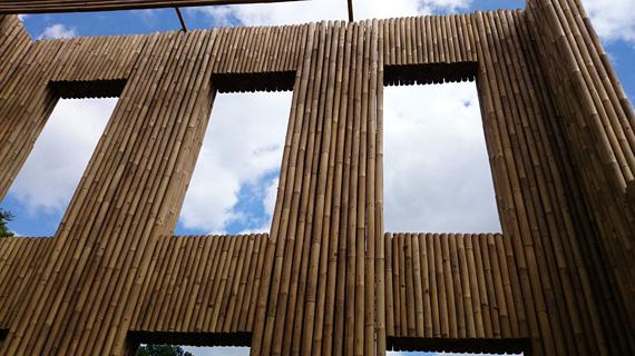 bamboe sonsbeek klein