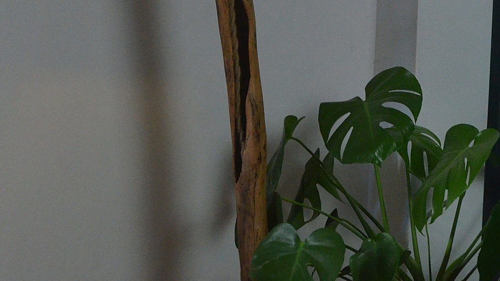 Hawthorn Lamp with Oak Base
