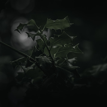 IMG_0029-HDR.jpg