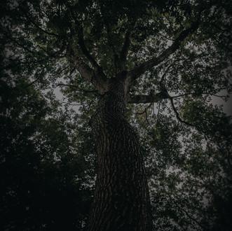 IMG_9954-HDR.jpg