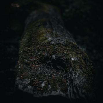 IMG_8457.jpg