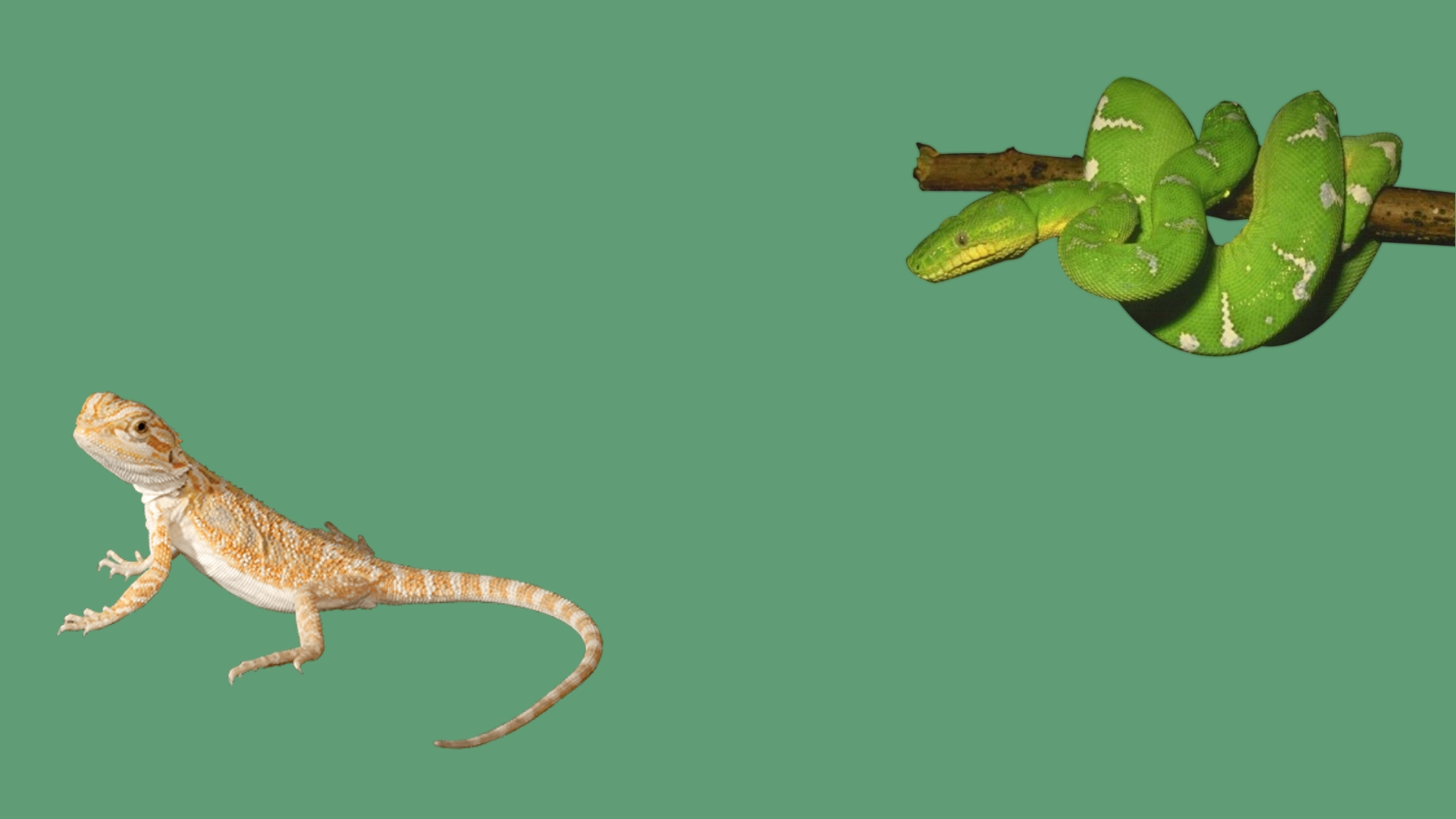 Reptile World | Pet Store and Pet Accessories