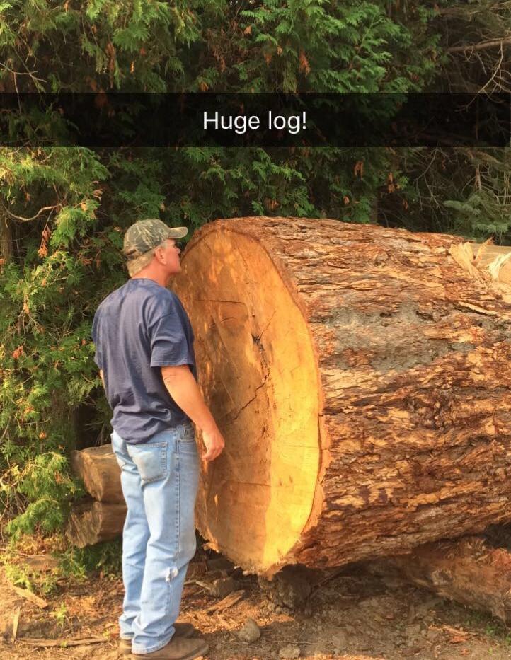 Fir Log