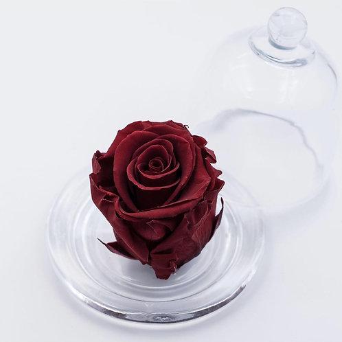 Cloche Beauty - Mini -