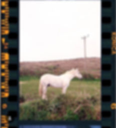 alecio ferrari white horse land