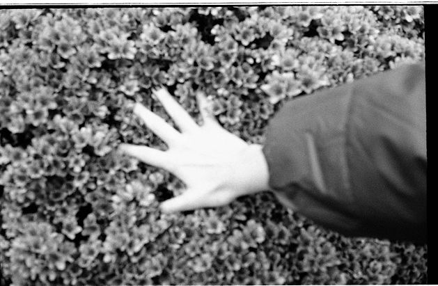 hand plants bw print darkroom film