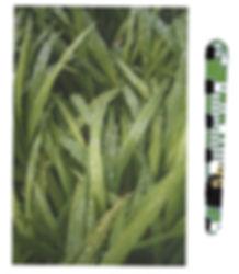 green watering grass uk sprng