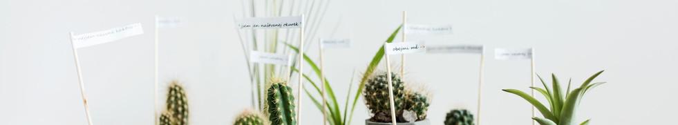 Betonové květináče s kaktusy.jpg