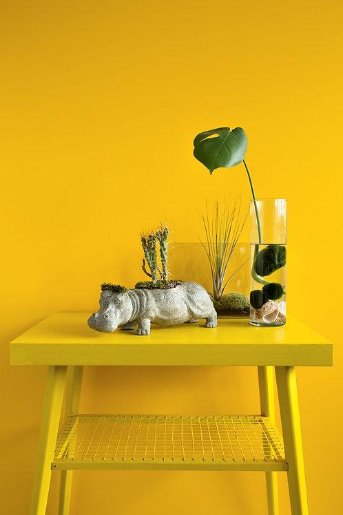 Květináč s kaktusem hroch