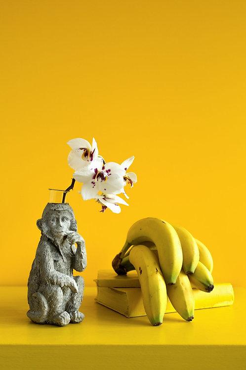 Váza makak