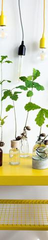 Dubové vázy