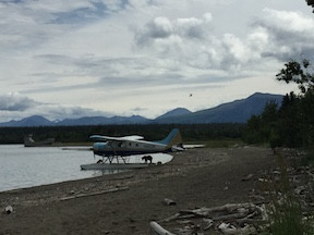 Curious bears at a float plane