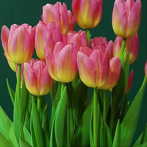 Тюльпан Том Паус - упаковка 5 луковицы