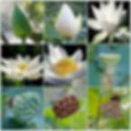 pendant necklace miami lotus dianaya