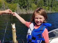 Fish for Walleye and Jack