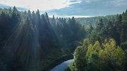 CPAWS Athabasca Drone-39.jpg
