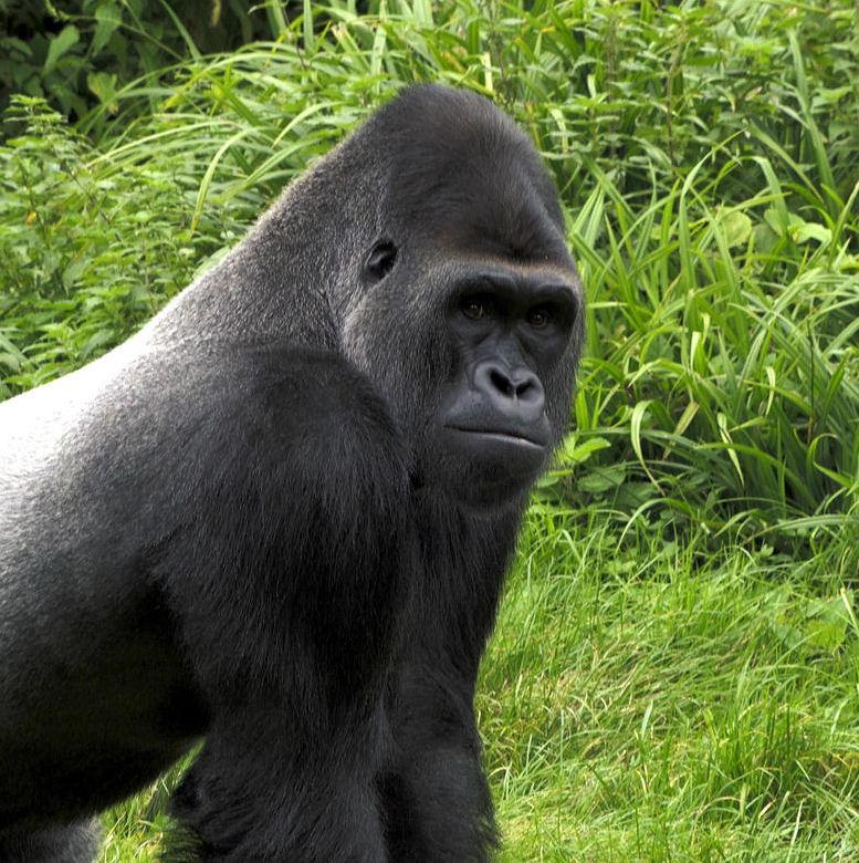Paignton Zoo, Devon