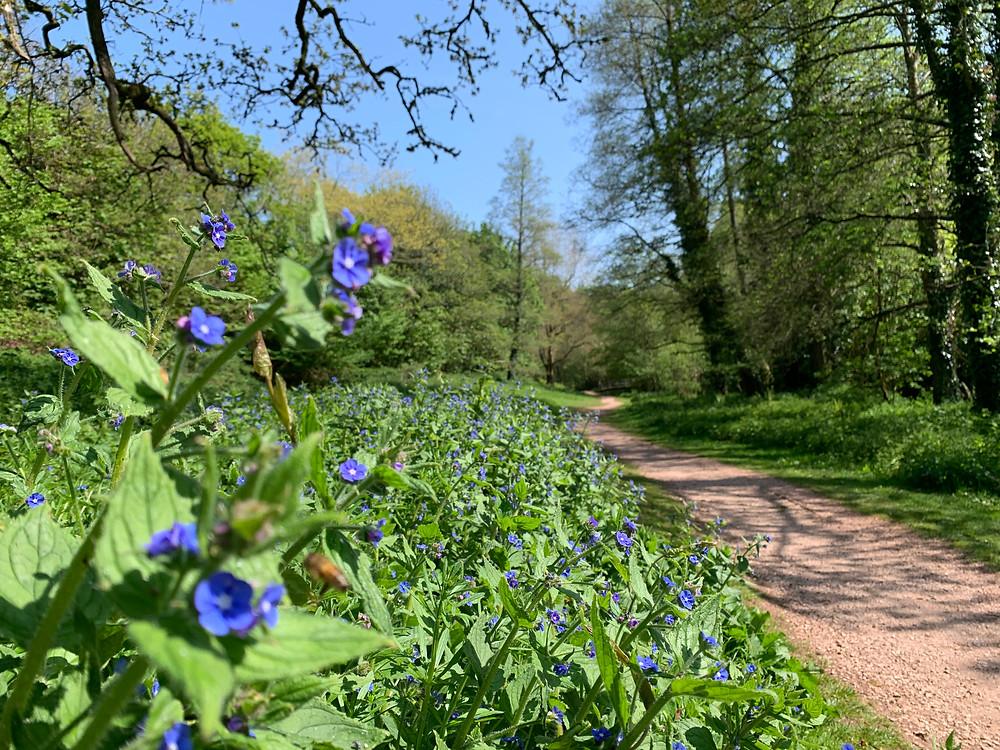 Woods at Cockington