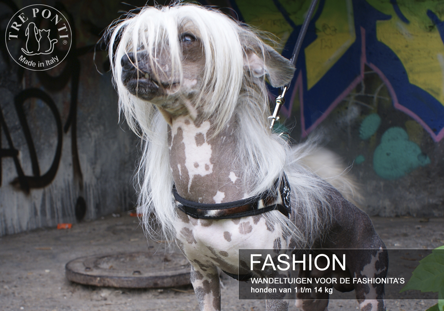 carroussel fashion