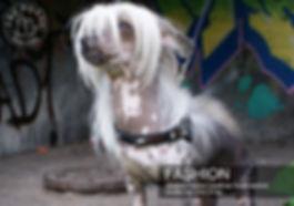 carroussel fashion.jpg