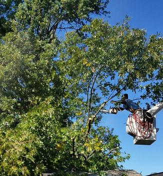 Tree%20trimming_edited.jpg