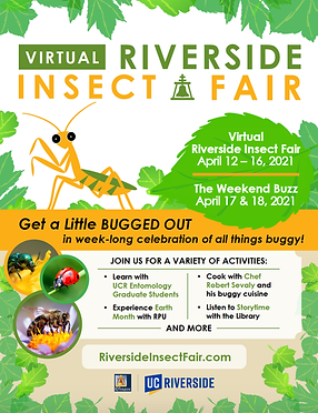 Insect fair 2021 v2.png