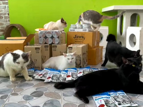 T&B Media Global and Jinny Brand Pair Up to Donate Cat Food and Snack to Soi Dog Foundation