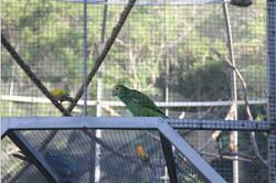 Bird Park 3
