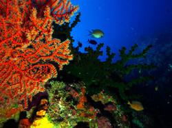 Marine Life © Roberto Allegretti