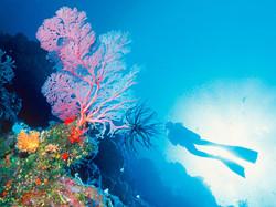 Scuba Diving © Eric Le Coëdic