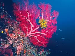 Coral in Lifou © Éric Le Coëdic