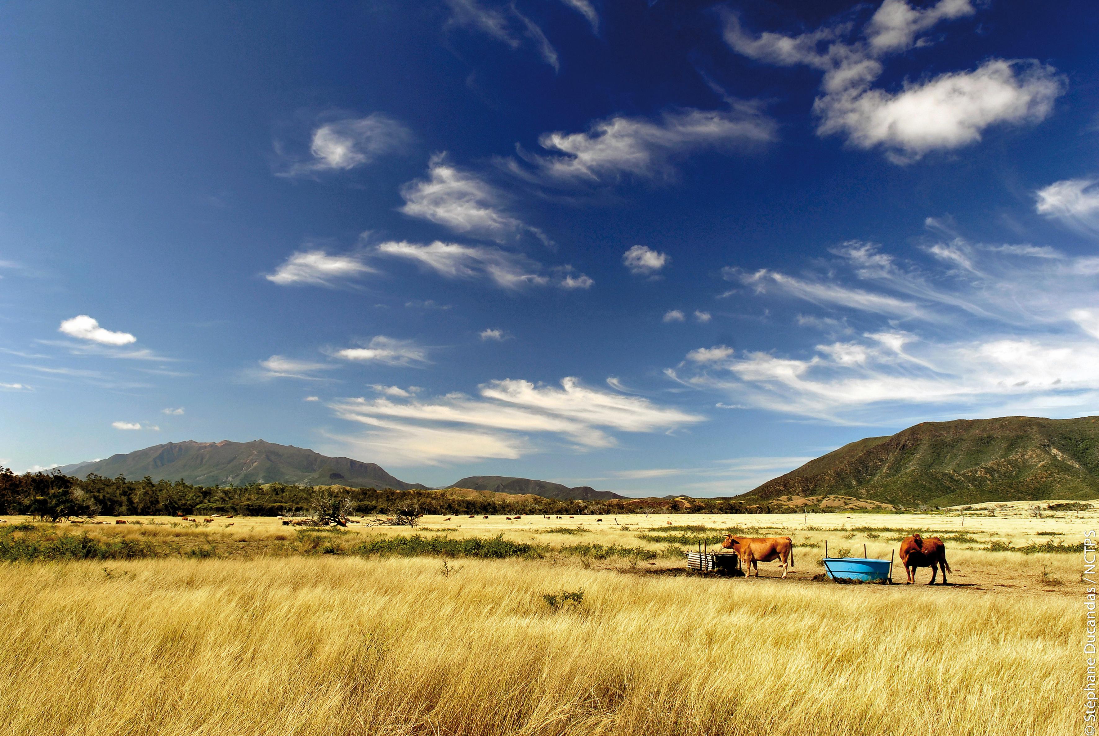 New Caledonia, West coast, Farm