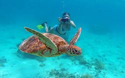 new caledonia reef snorkeling