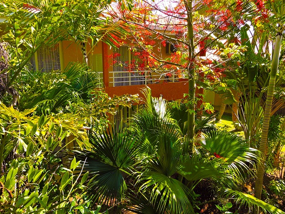 Koniambo Garden