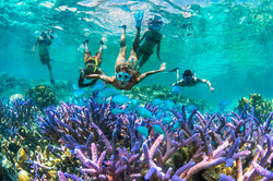 Snorkel Ile des Pins