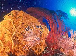 Coral & Red Lionfish ©Éric Le Coëdic