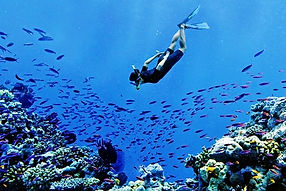 Activities, Tours, Diving, Snorkelling, New Caledonia, Nouvelle Calédonie, Holidays, Travel, luxury