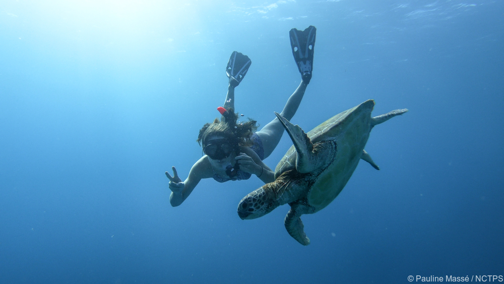 Snorkeling - tortle