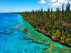 New Caledonia Pines © Ducandas