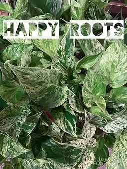 HAPPY ROOTS IMAGE.jpg