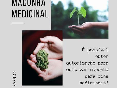 PLANTIO DE MACONHA MEDICINAL