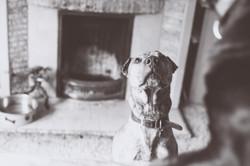 Doggo looking for his mum