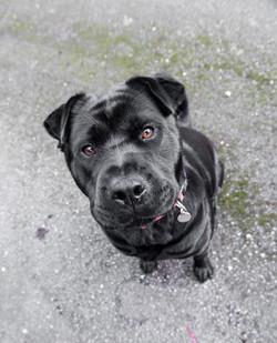 Gorgeous Eyes on this dog