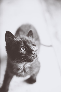 Mischief maker pussy cat