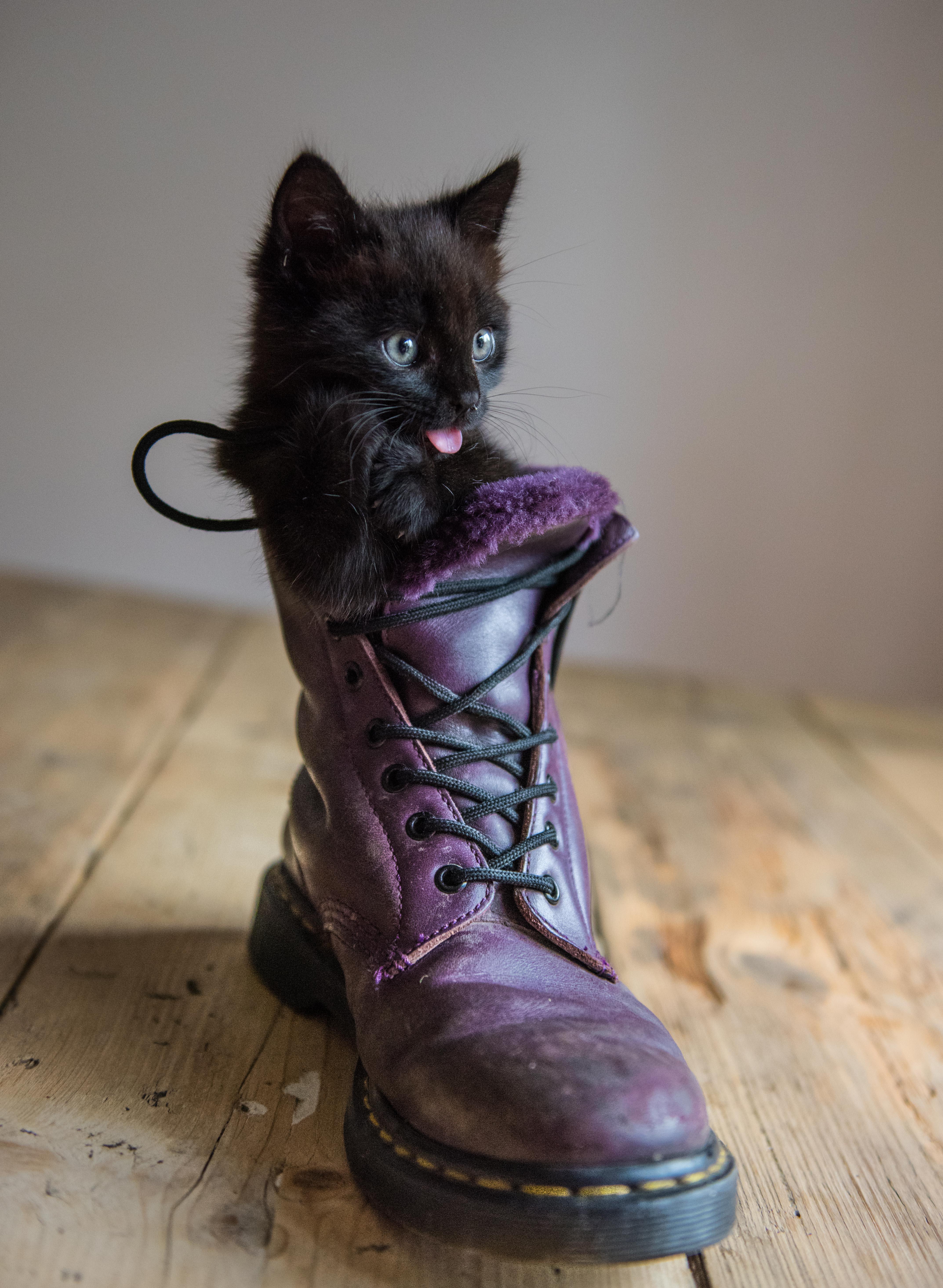Dr Martens kitten